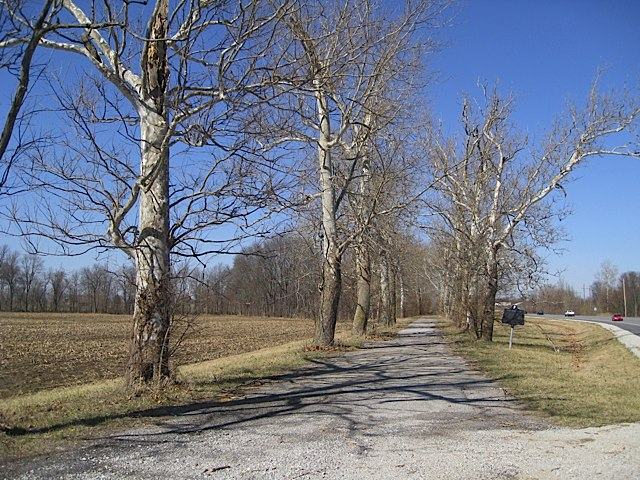 Sycamore Row in Carroll County Indiana